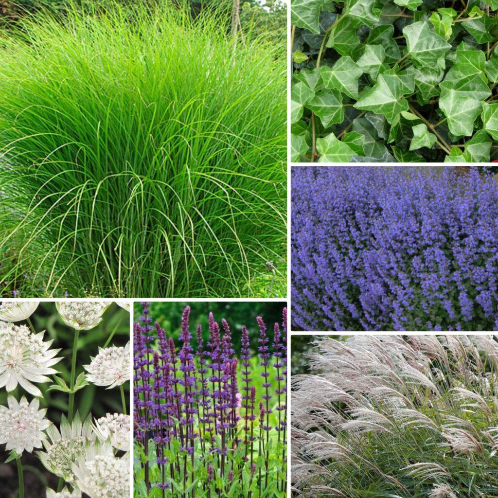 Trädgårdsdesign med Växtförslag