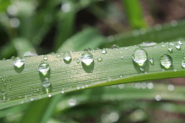 Trädgårdsgestaltning och gröna blad